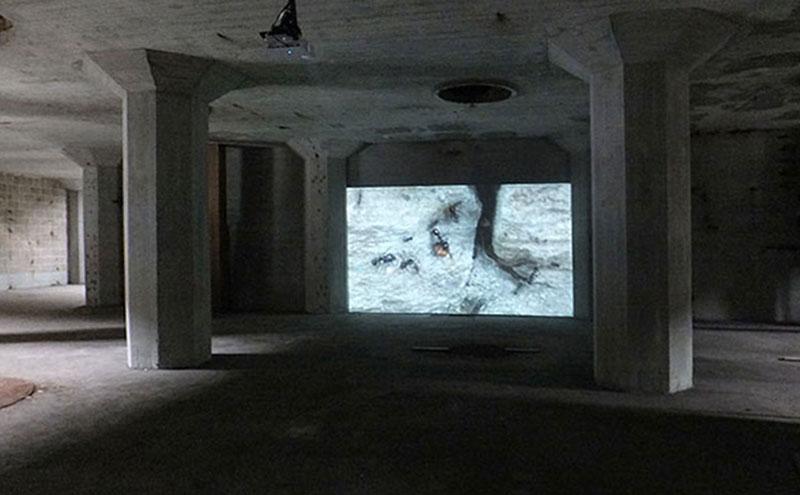 video over mieren tijdens expositie in De Meelfabriek Leiden